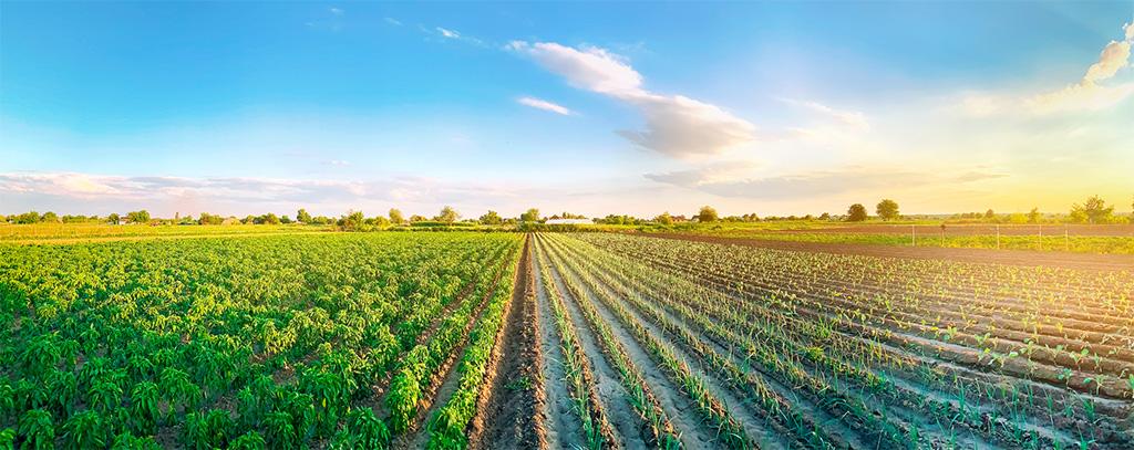 O Patrimônio Rural e o Regime de Afetação